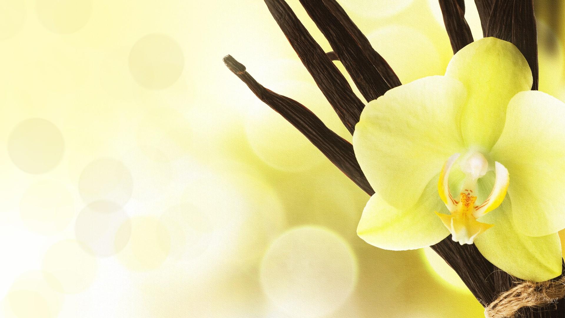 Orchids wallpaper wallpapersafari - White orchid flowers desktop wallpapers ...