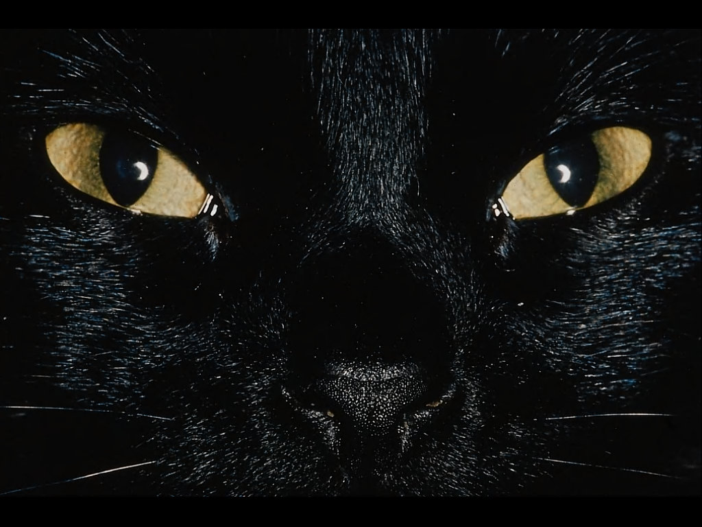 The Cat Cats Wallpapers Desktop Backgrounds 1024x768
