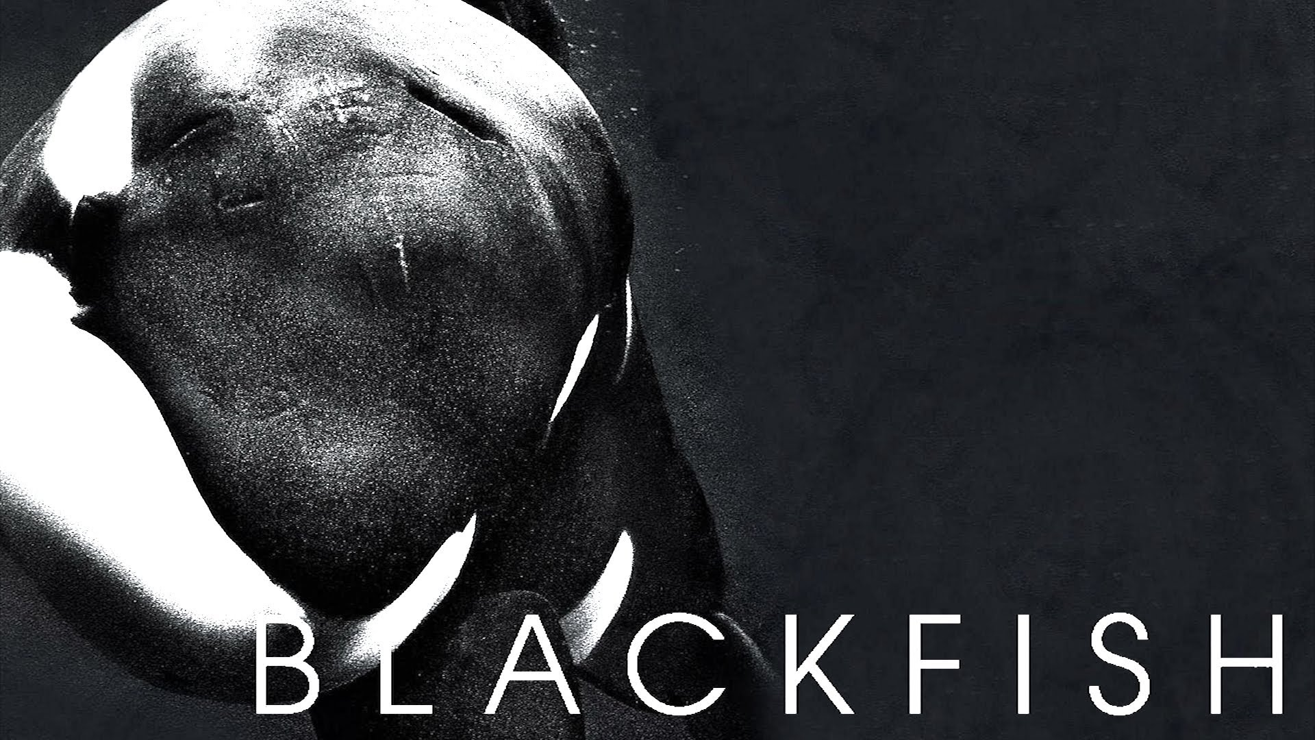 Blackfish The World Changing Super Awesome Documentary 1920x1080