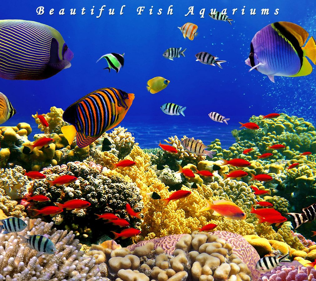 [49+] Live Aquarium Wallpapers On WallpaperSafari