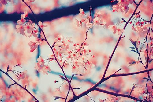 cerejeira on Tumblr 500x332