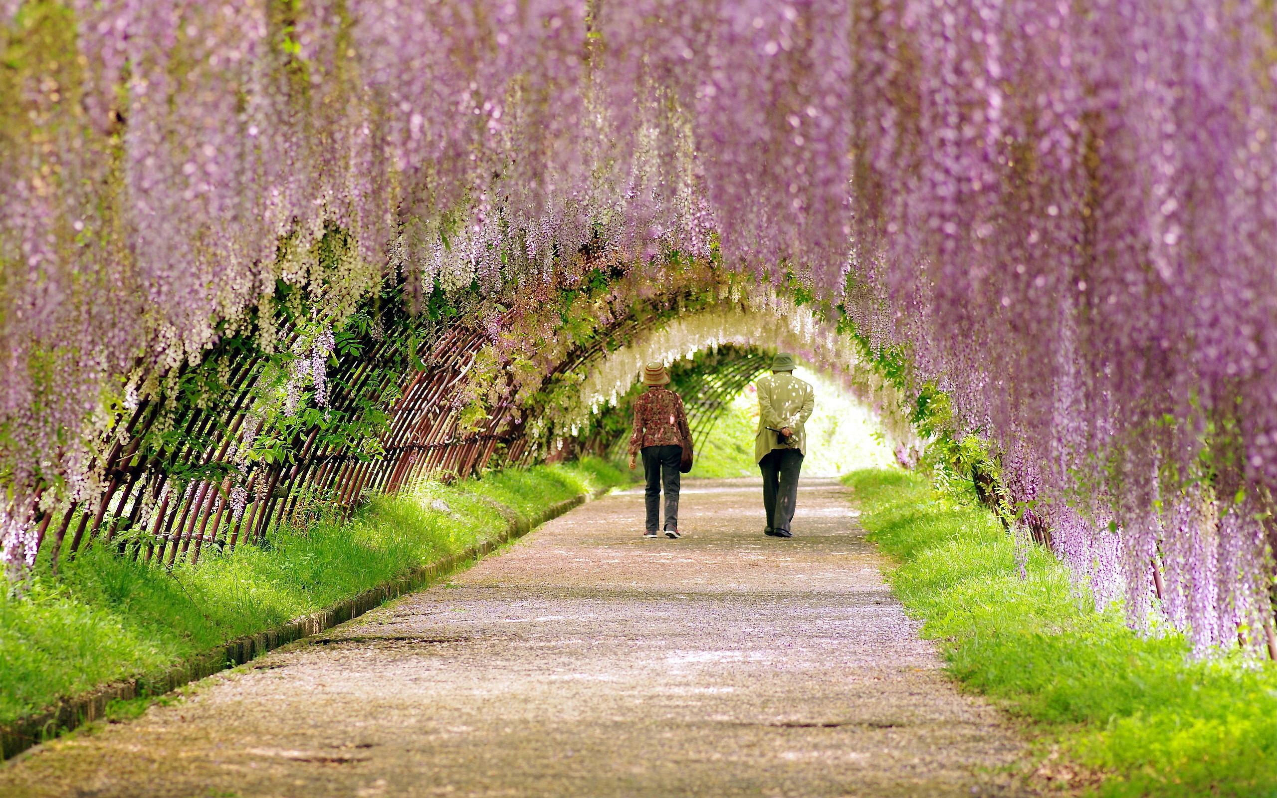 Beautiful Spring Flowers Garden Wallpapers Pic 18513 Wallpaper 2560x1600