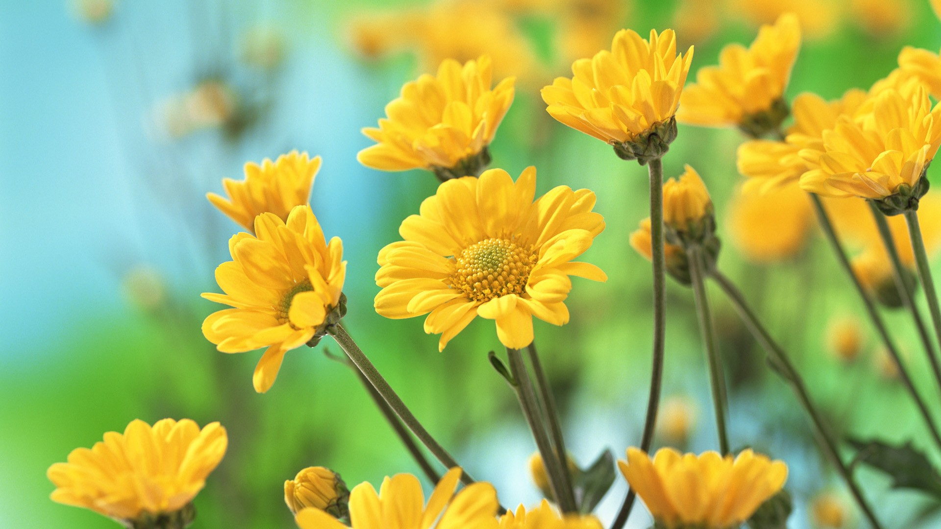 yellow flowers wallpaper - wallpapersafari