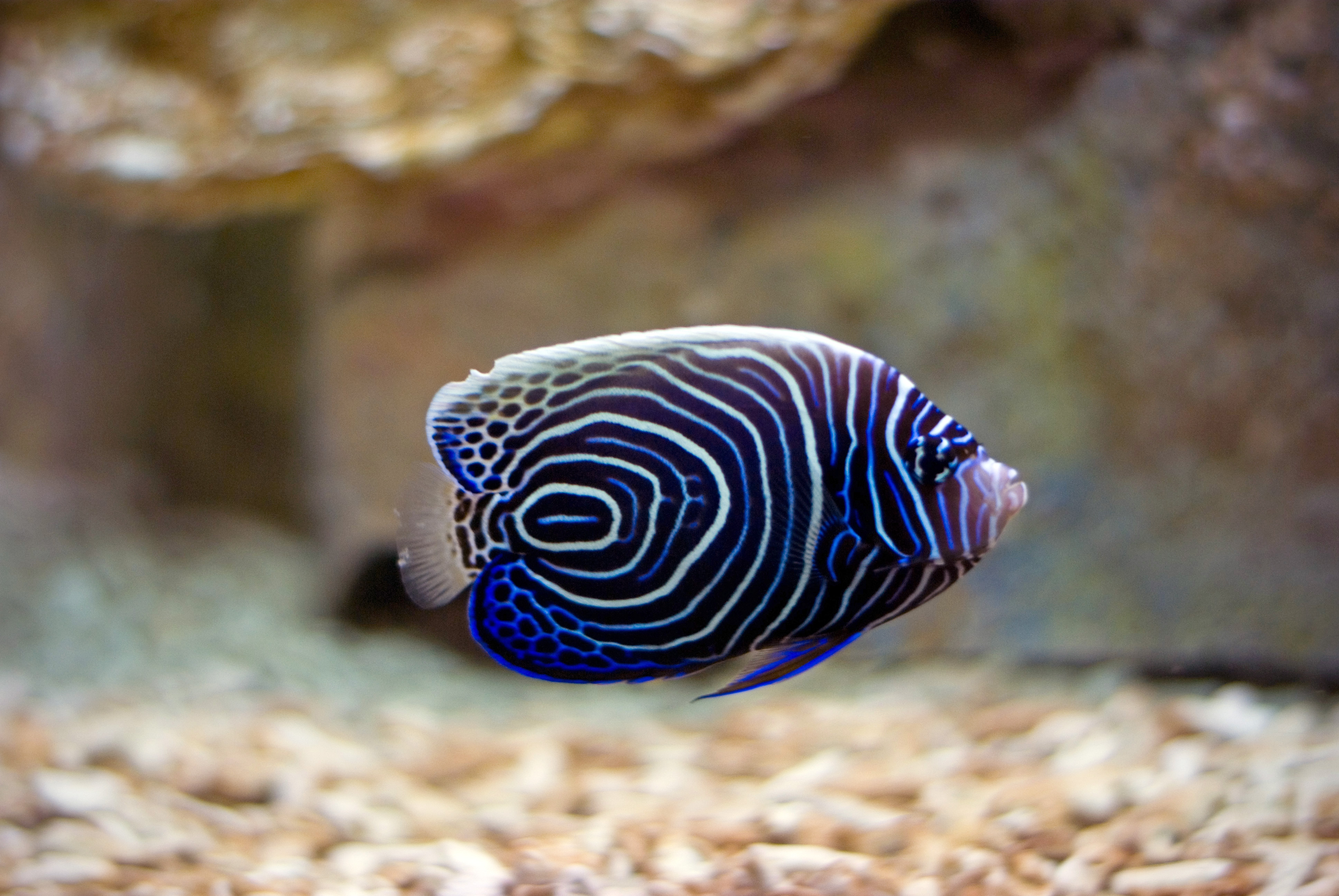a fish All fish share two traits: they live in water and they have a backbone—they are vertebrates apart from these similarities, however, many of the species in this group differ markedly from one another.