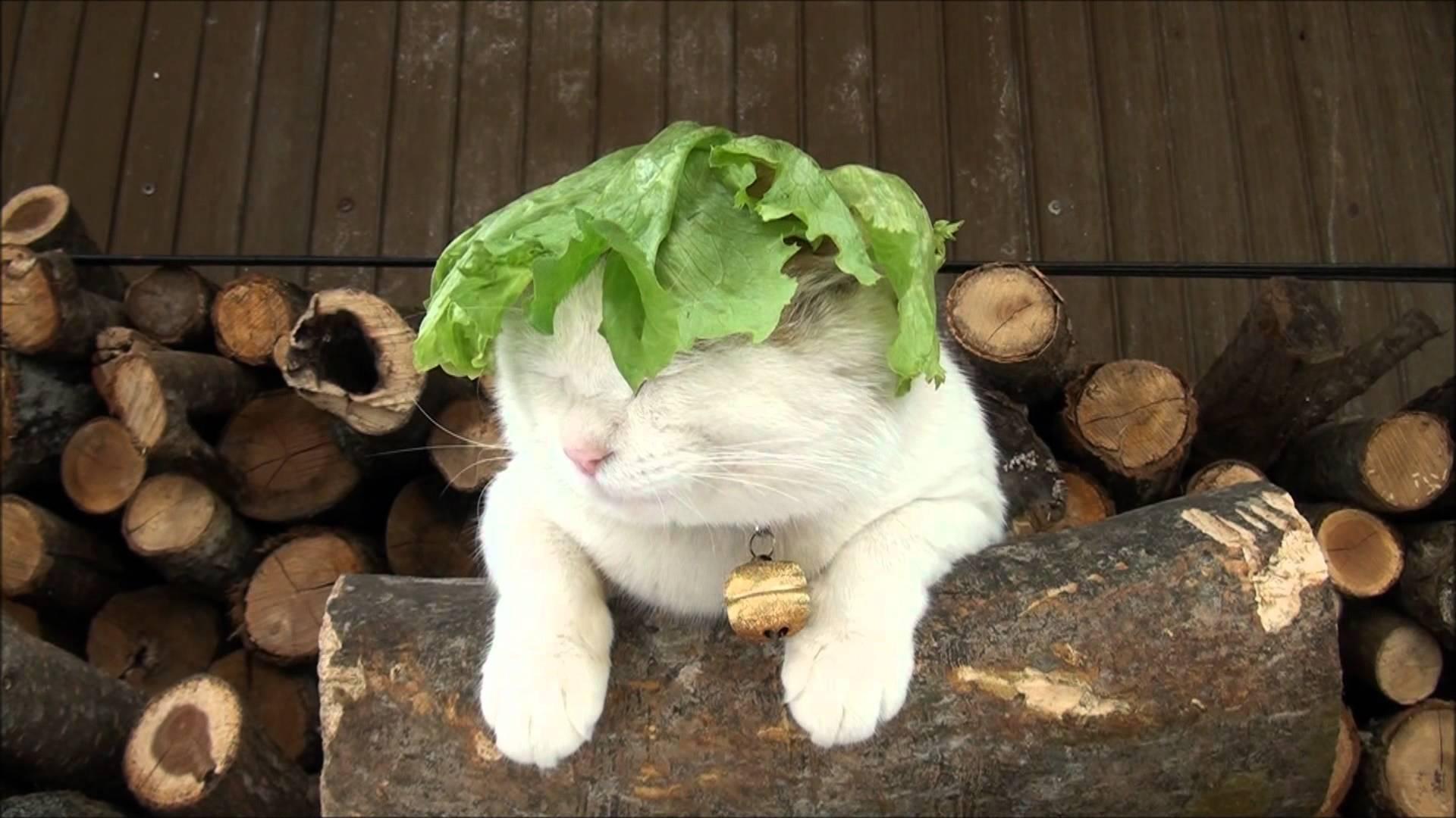 Lettuce 1920x1080