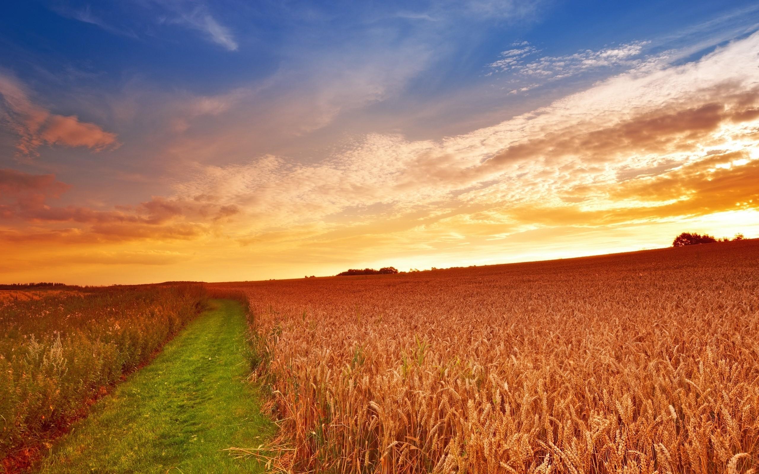 Farming Wallpaper HD 2560x1600