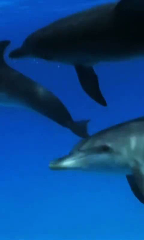 Download Dolphins 1 live wallpaper for your Android phone 480x800