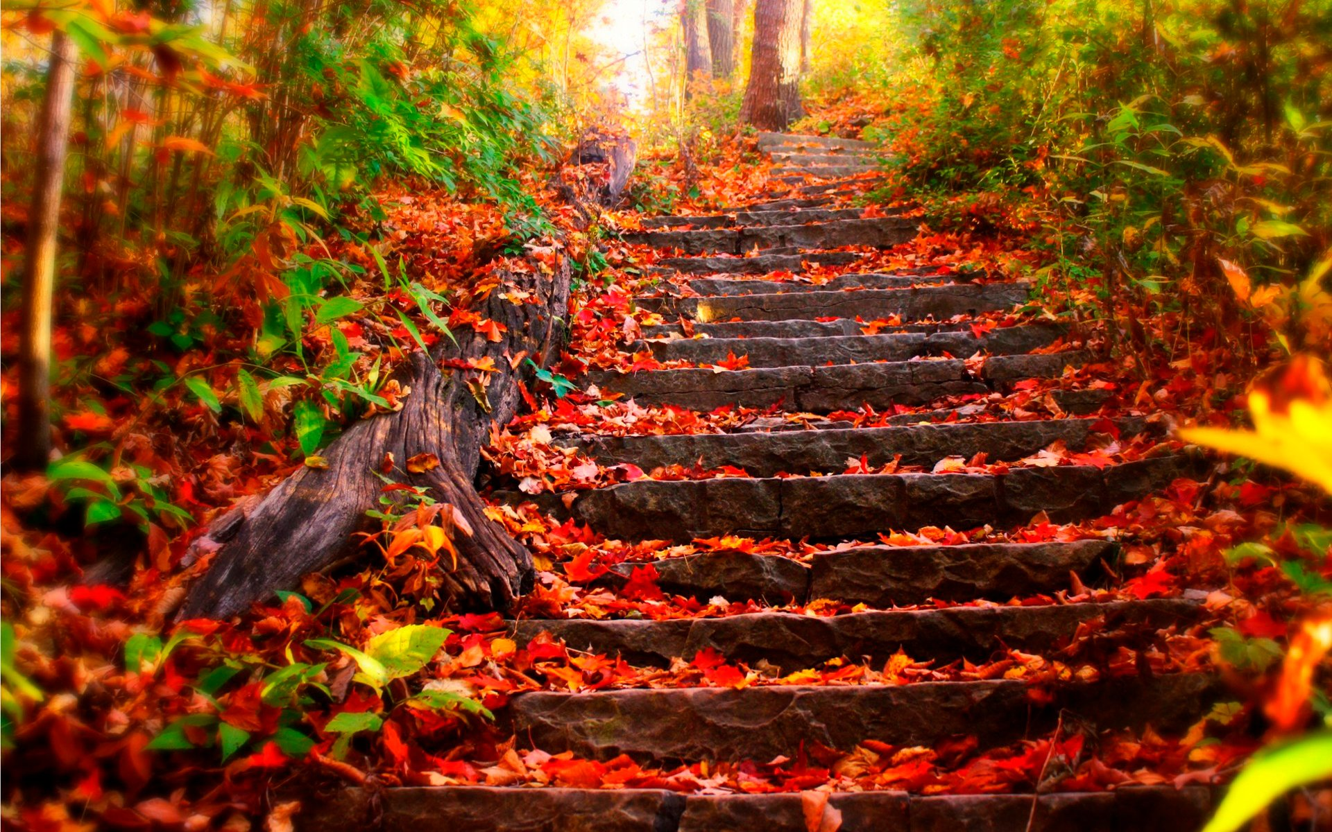 Autumn steps 1920 x 1200 Other Photography MIRIADNACOM 1920x1200