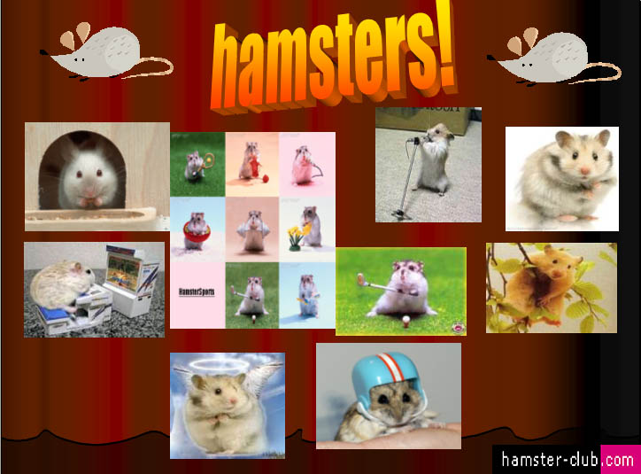 Hamster Club Visitors Creativity Hamster Wallpapers Hamster Art 724x535