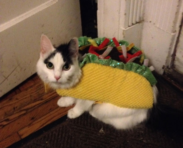 ... Taco Cat Wallpaper by Taco Cat Wallpaper Wallpapersafari ...