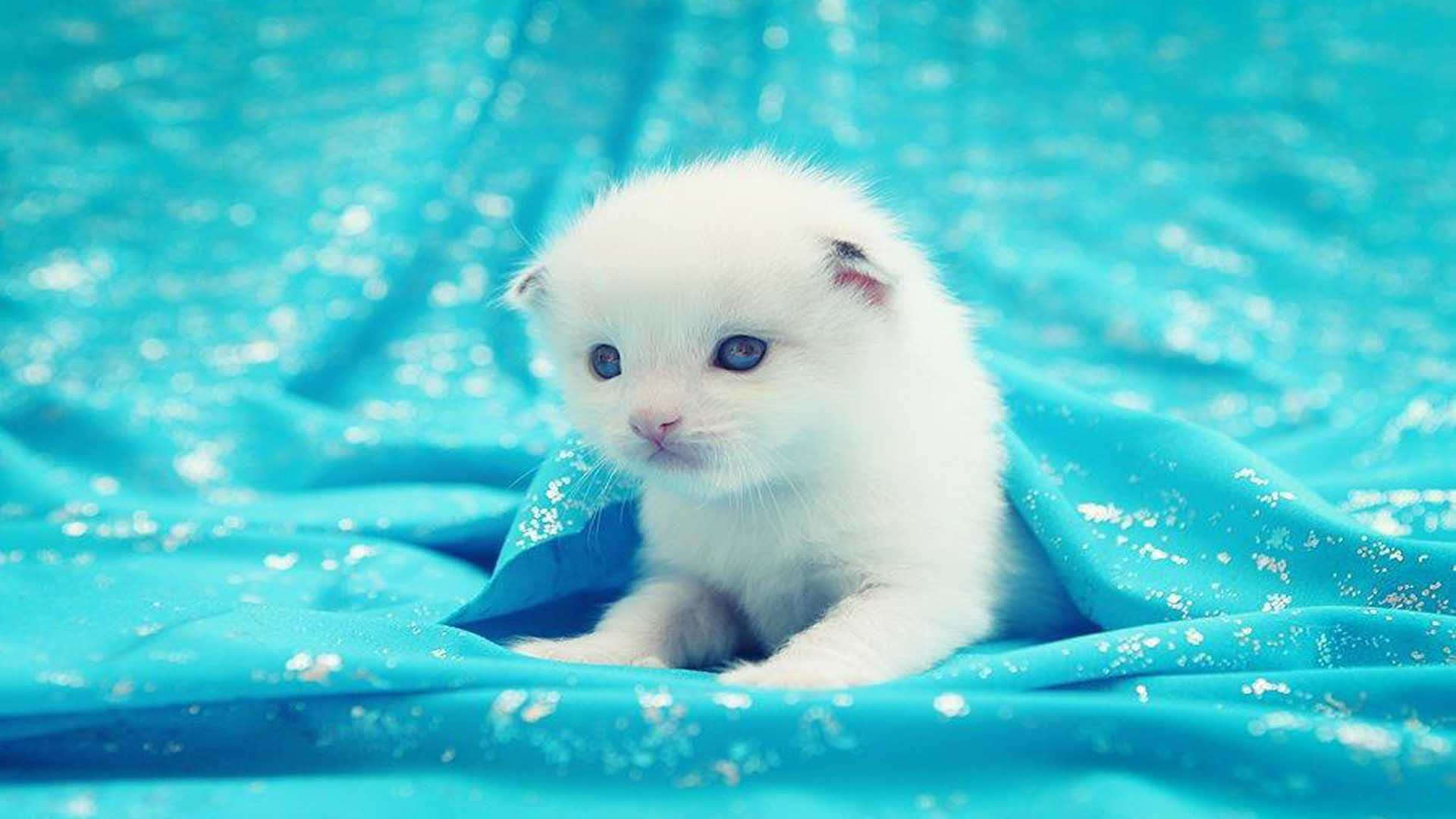 Cute Kitten Desktop Wallpaper   DreamLoveWallpapers 1920x1080