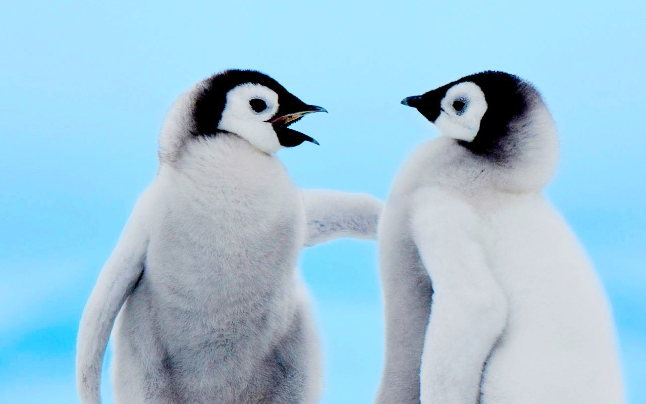 Cute Penguin Quotes QuotesGram 1280x800