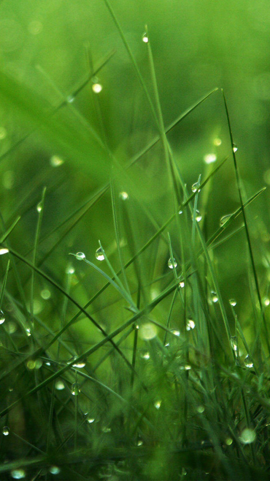 Grass At Dawn Wallpaper   iPhone Wallpapers 540x960