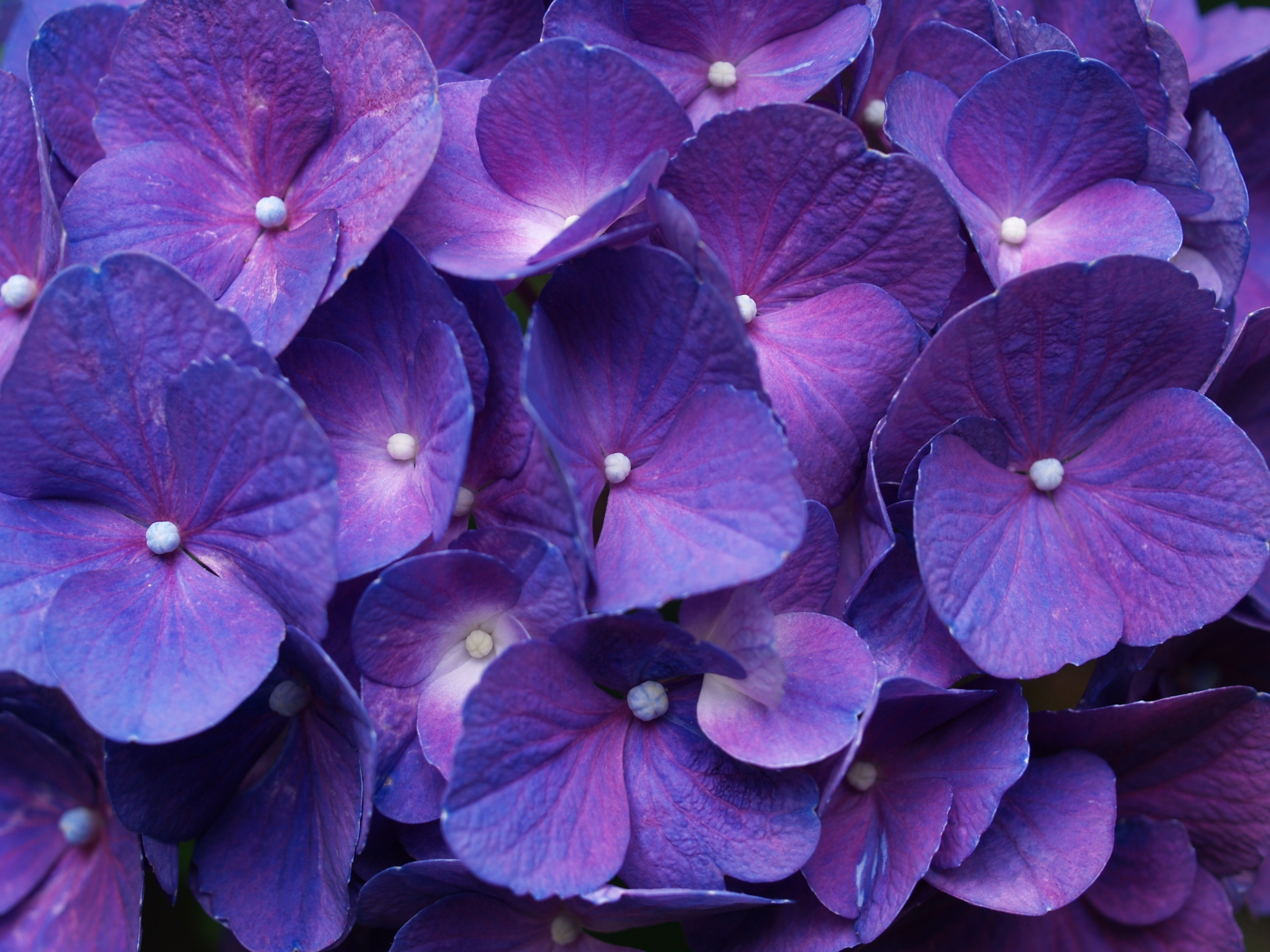 39 High Definition Purple Wallpaper Images for Download 2560x1920