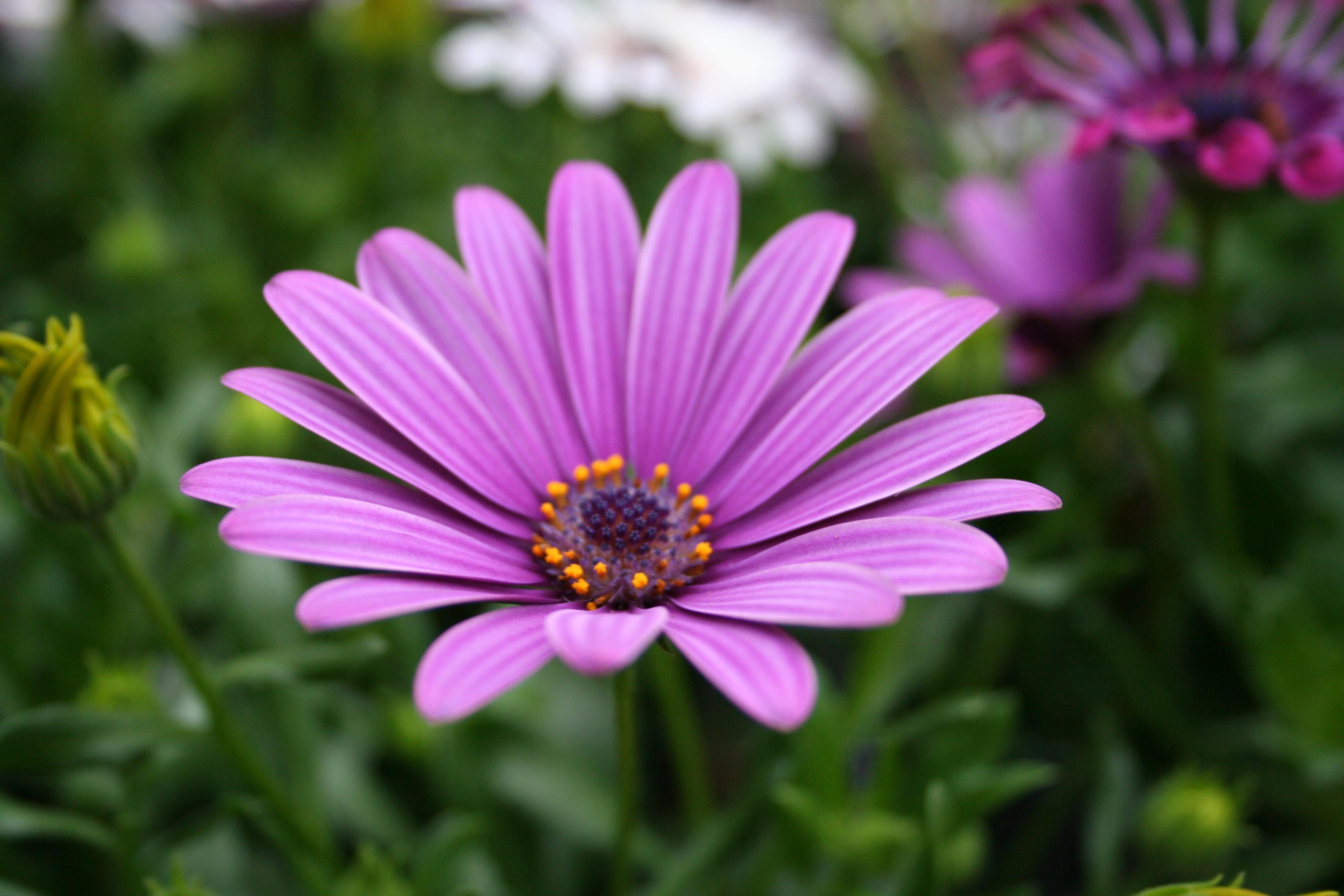 Flower Wallpaper Purple Flowers Wallpaper 3456x2304