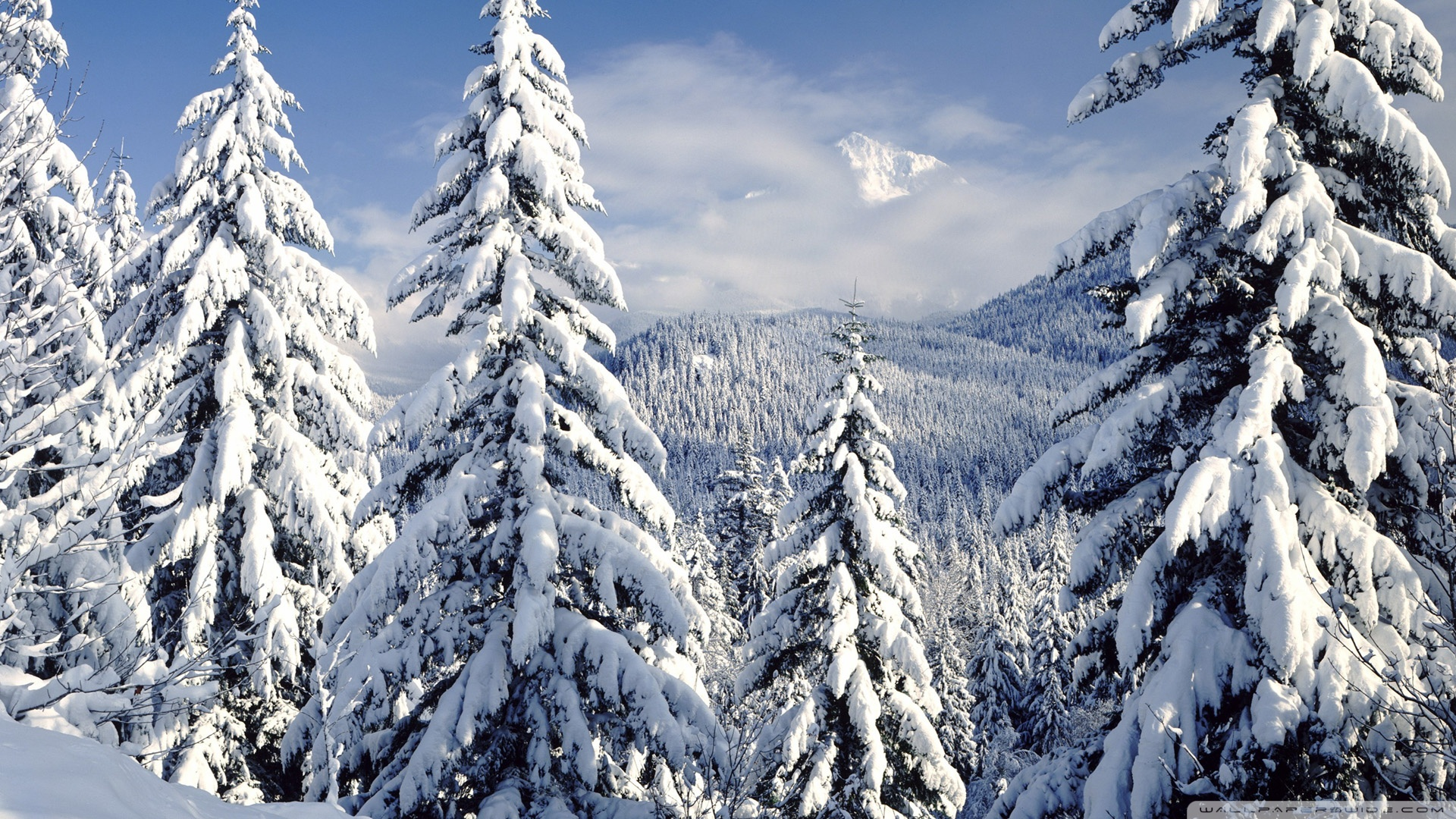 Snowy Trees wallpaper 1920x1080 79848 1920x1080