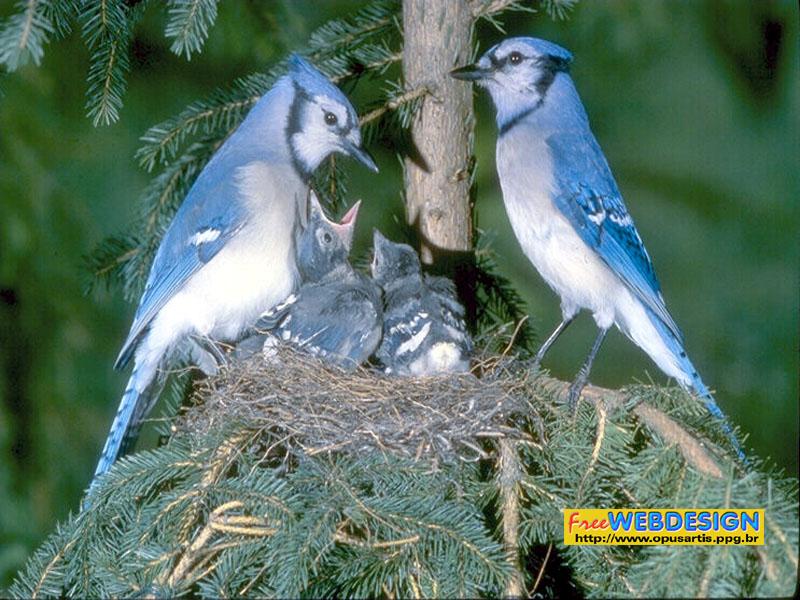 birds1e wjpg 150635 bytes 800x600
