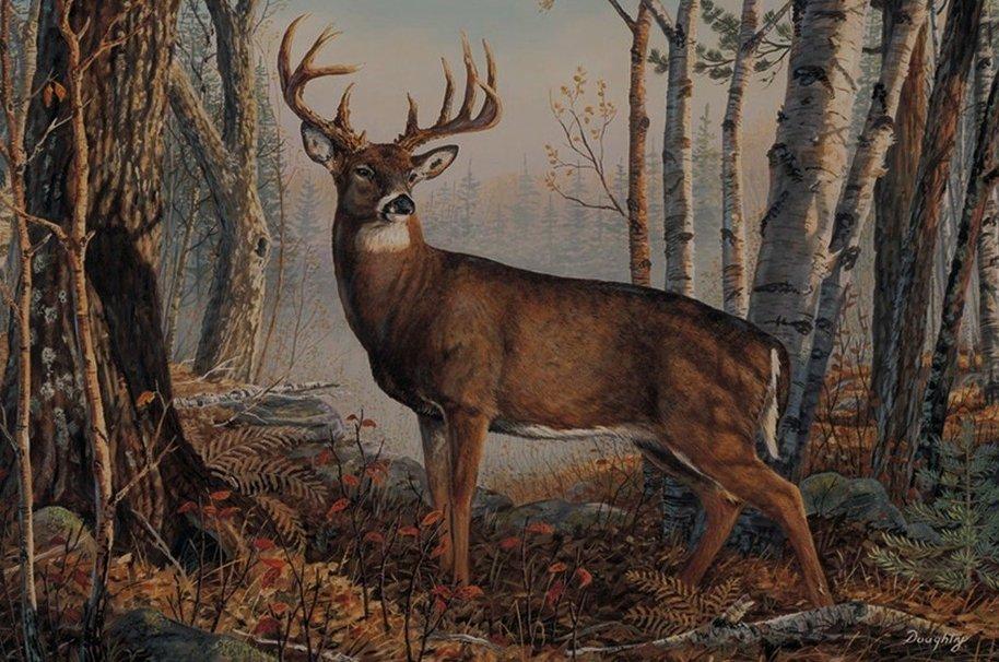 Big Whitetail Buck Wallpaper