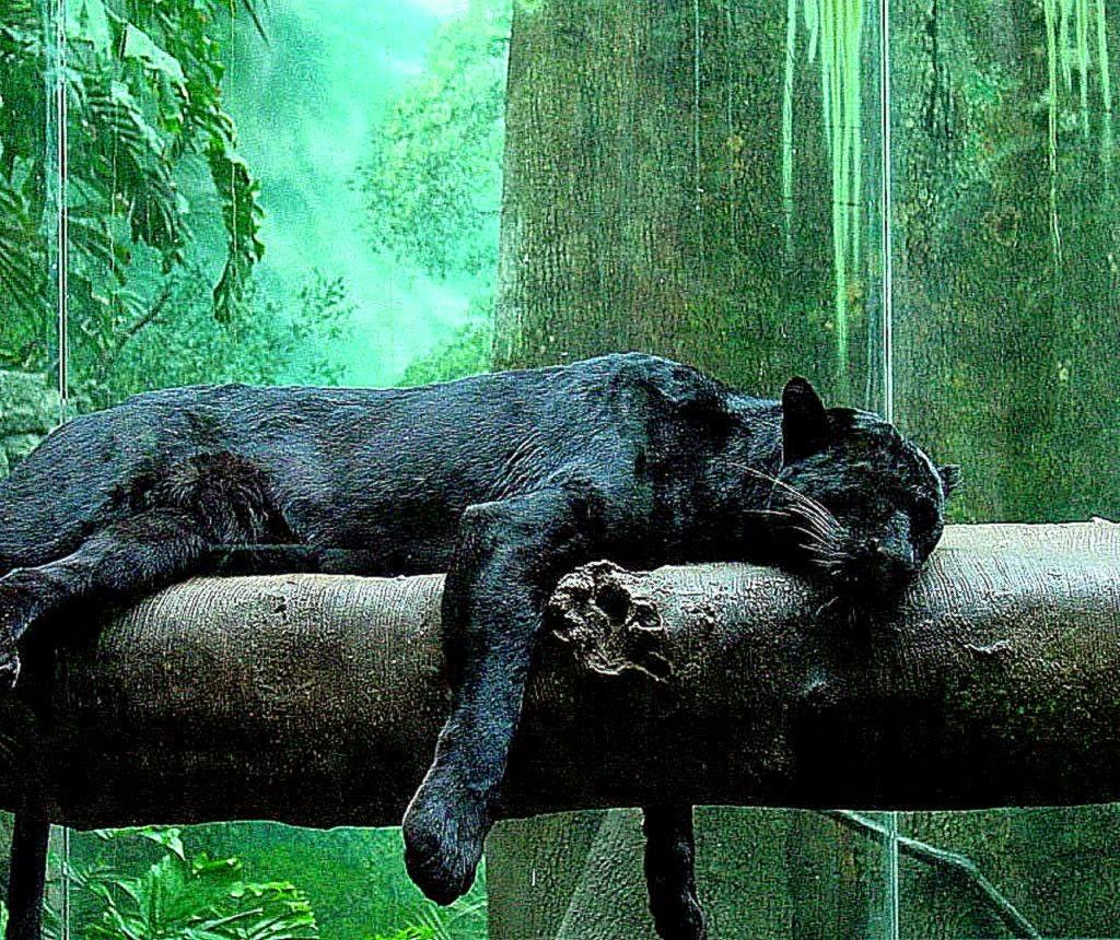 Jungle Animals Wallpapers Hd Desktop Background Wallpaper Gallery 1024x860