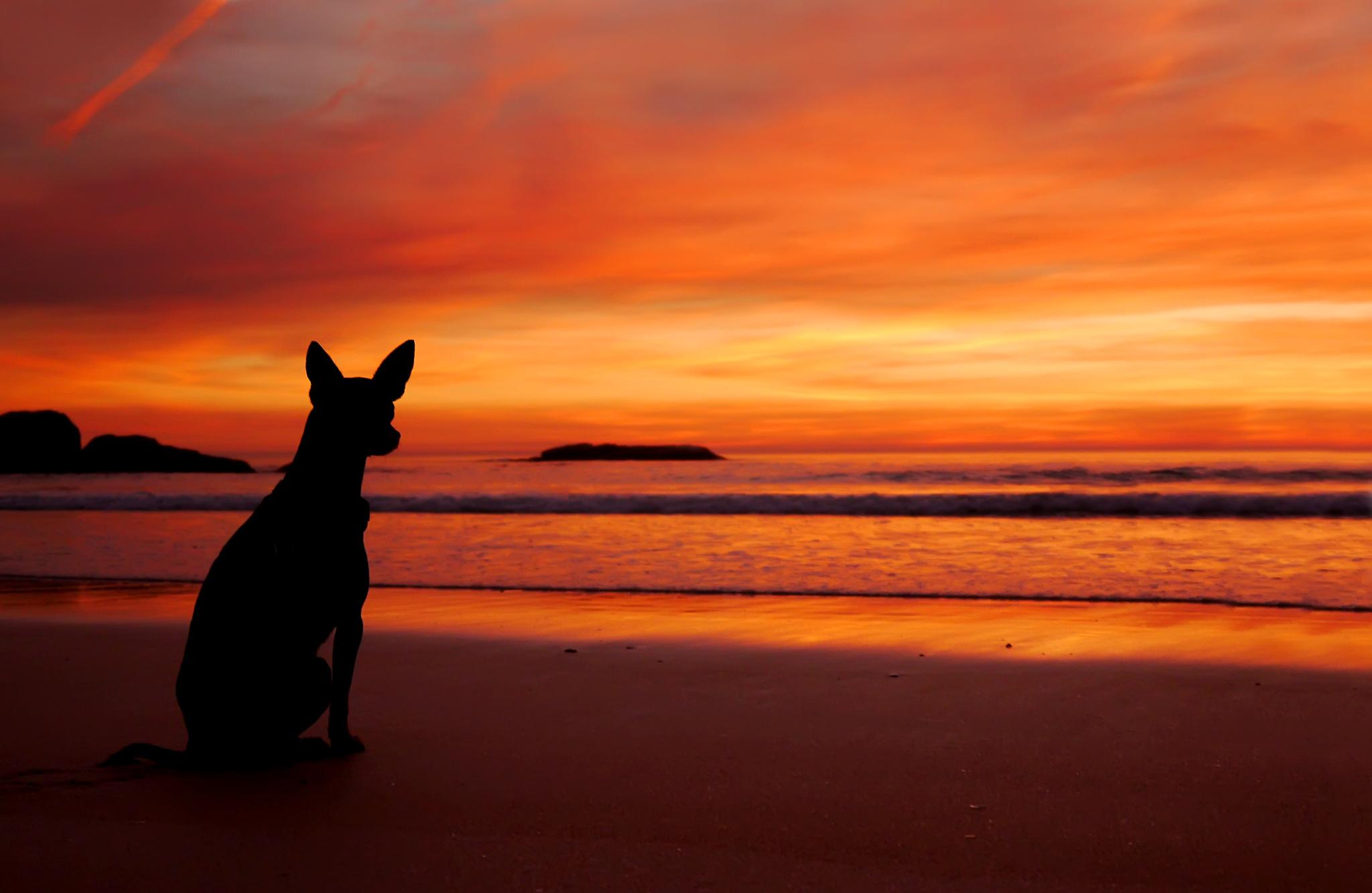 dog silhouette wallpaper - wallpapersafari
