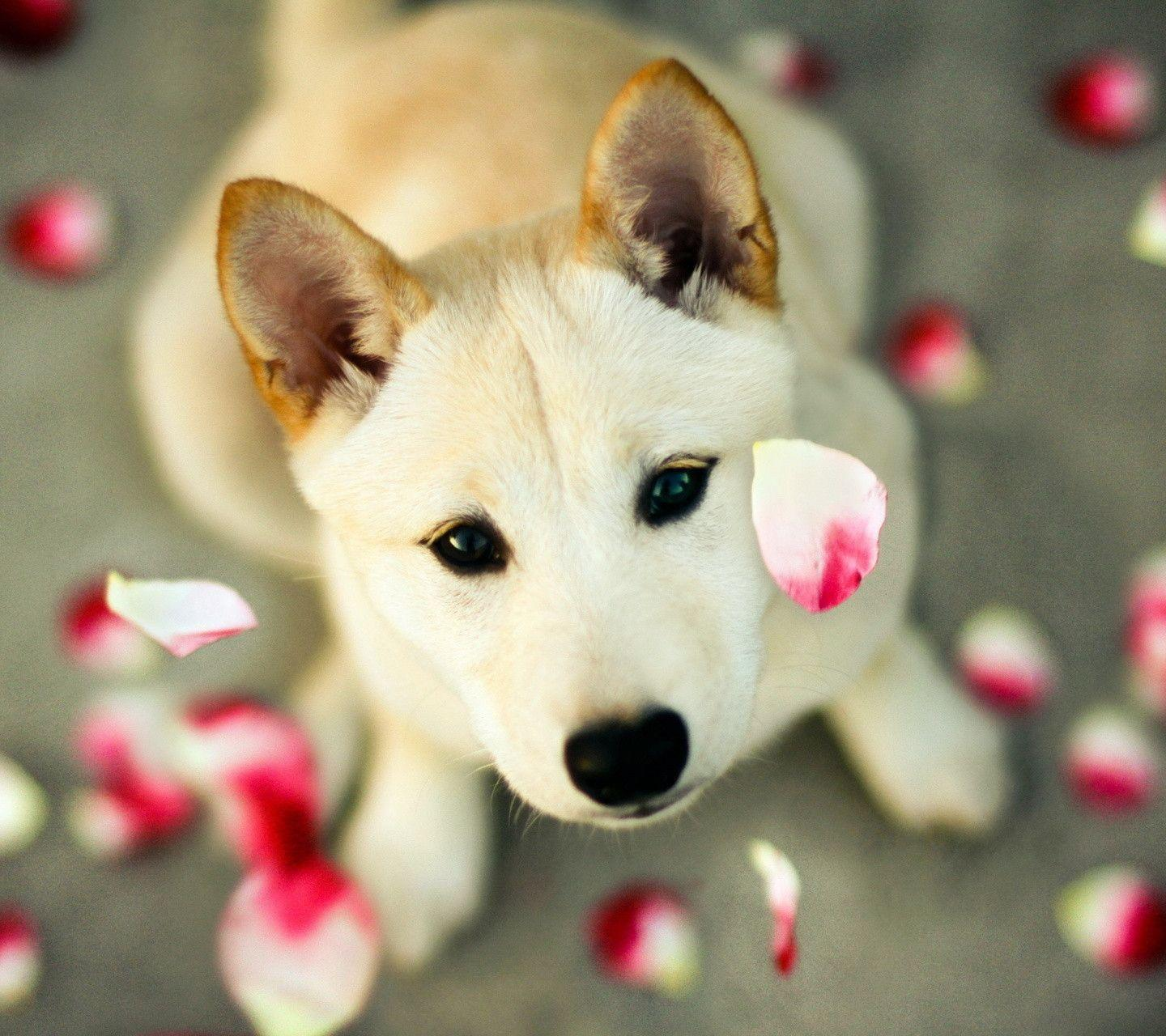 Free Download Dog Wallpapers 1440x1280 For Your Desktop