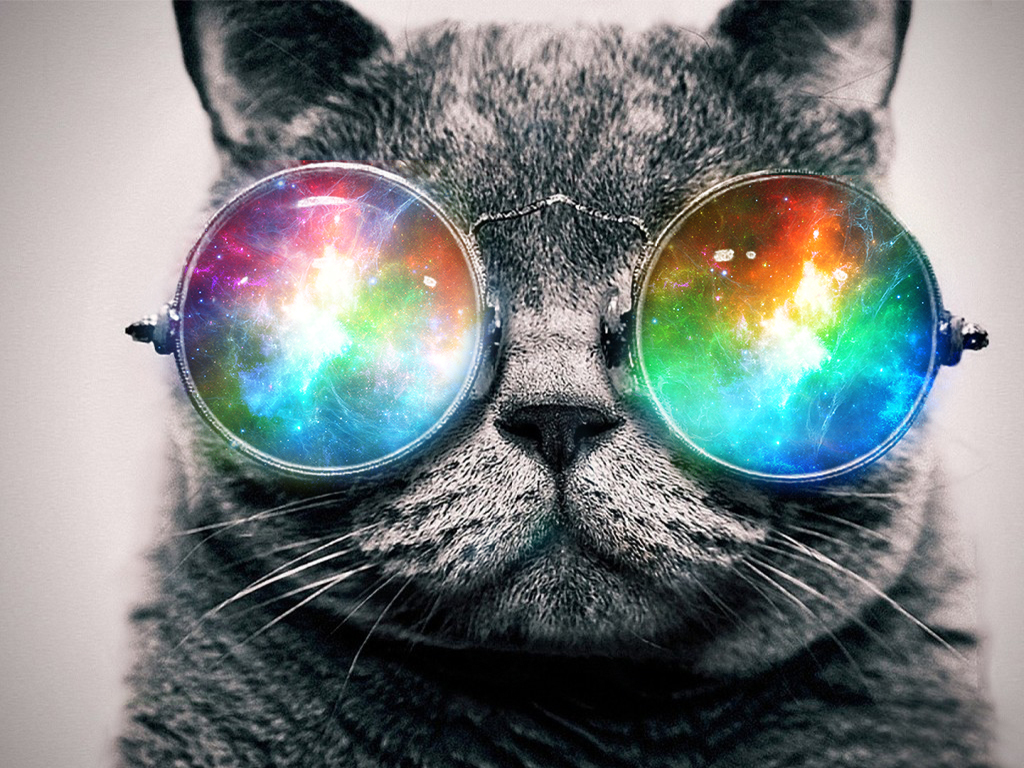 hipster cat tumblr background