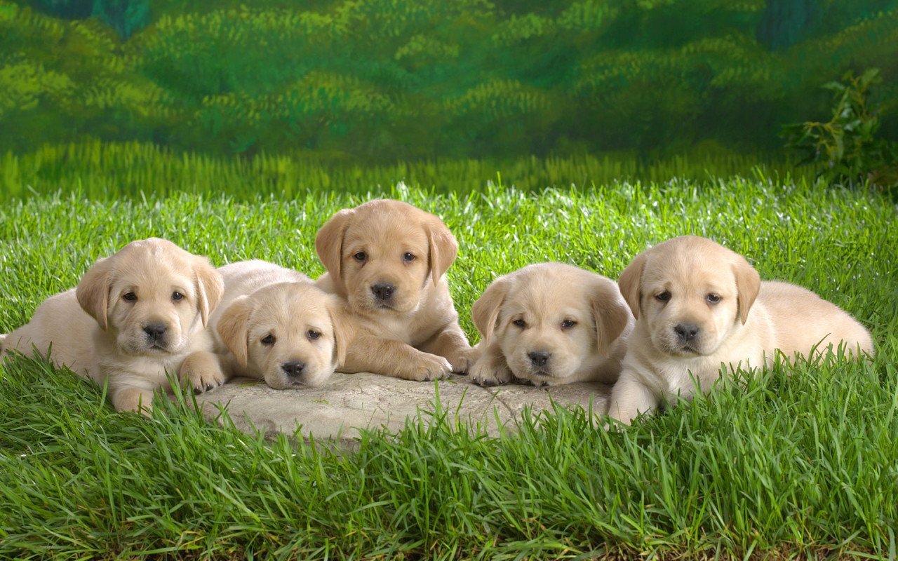 cute puppies and dogs with the title Some cute puppies and dogs 1280x800