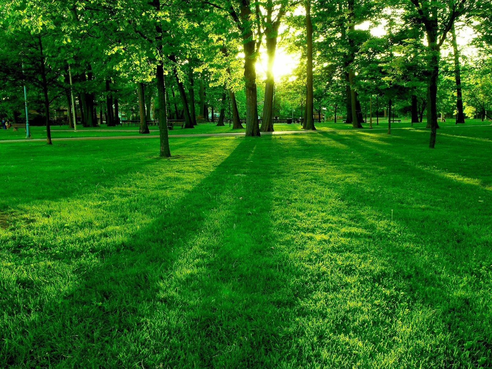 free beautiful nature green - photo #9