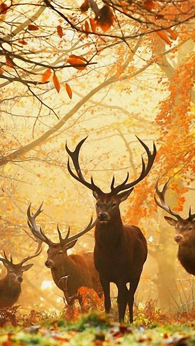 <b>Deer</b> Desktop <b>Wallpaper</b> - <b>Wallpapers</b> Browse