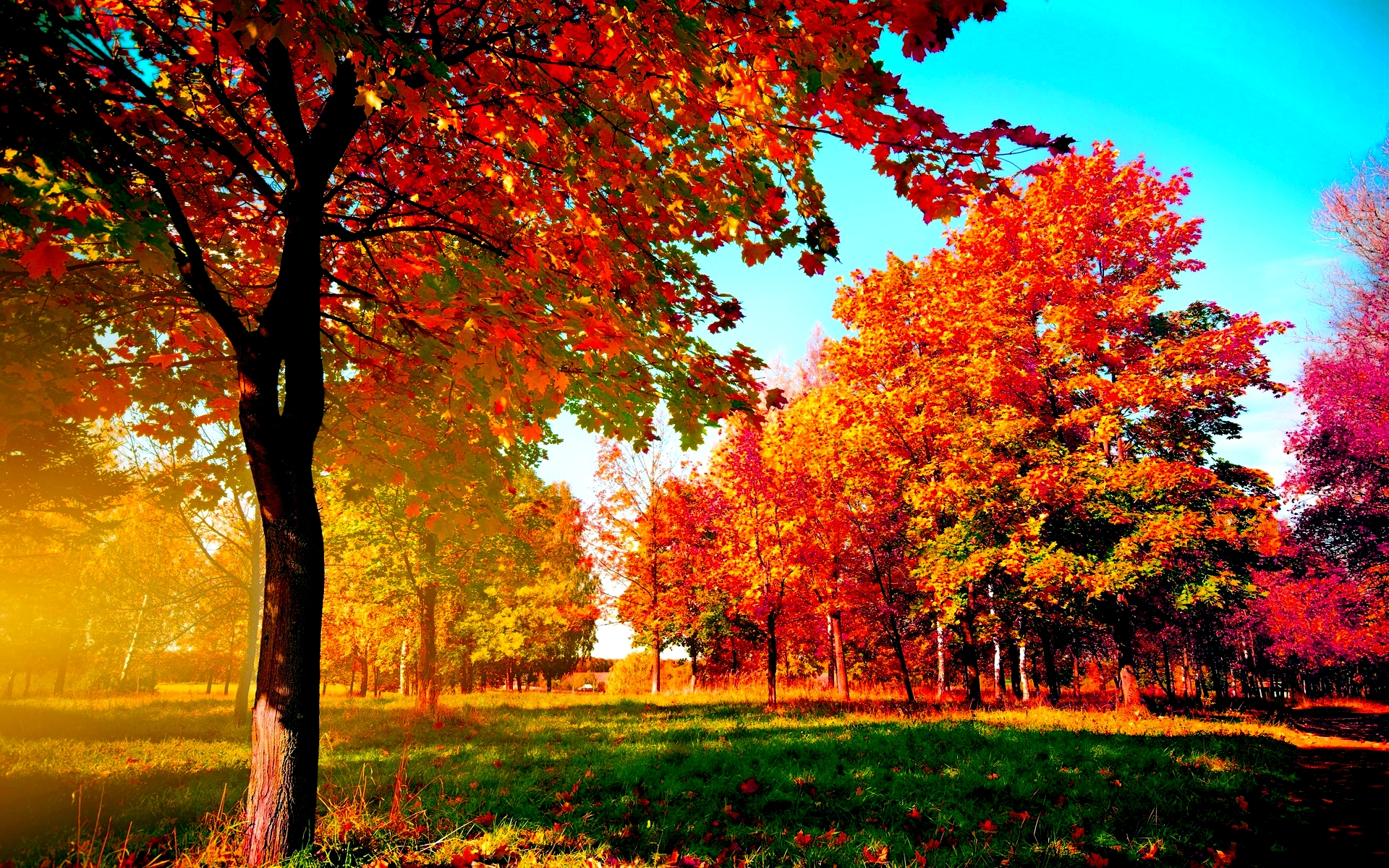 Autumn Trees   Wallpapers 1920x1200