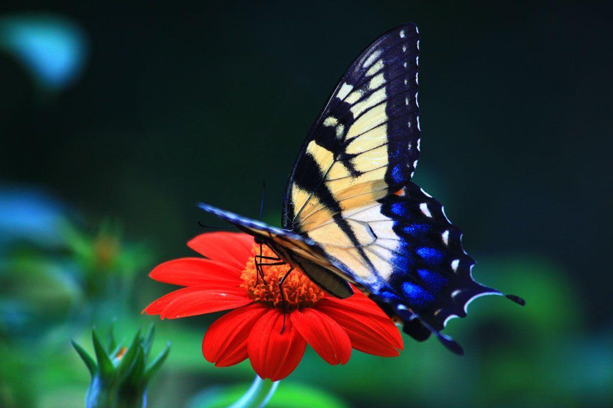Bright butterfly wallpapers