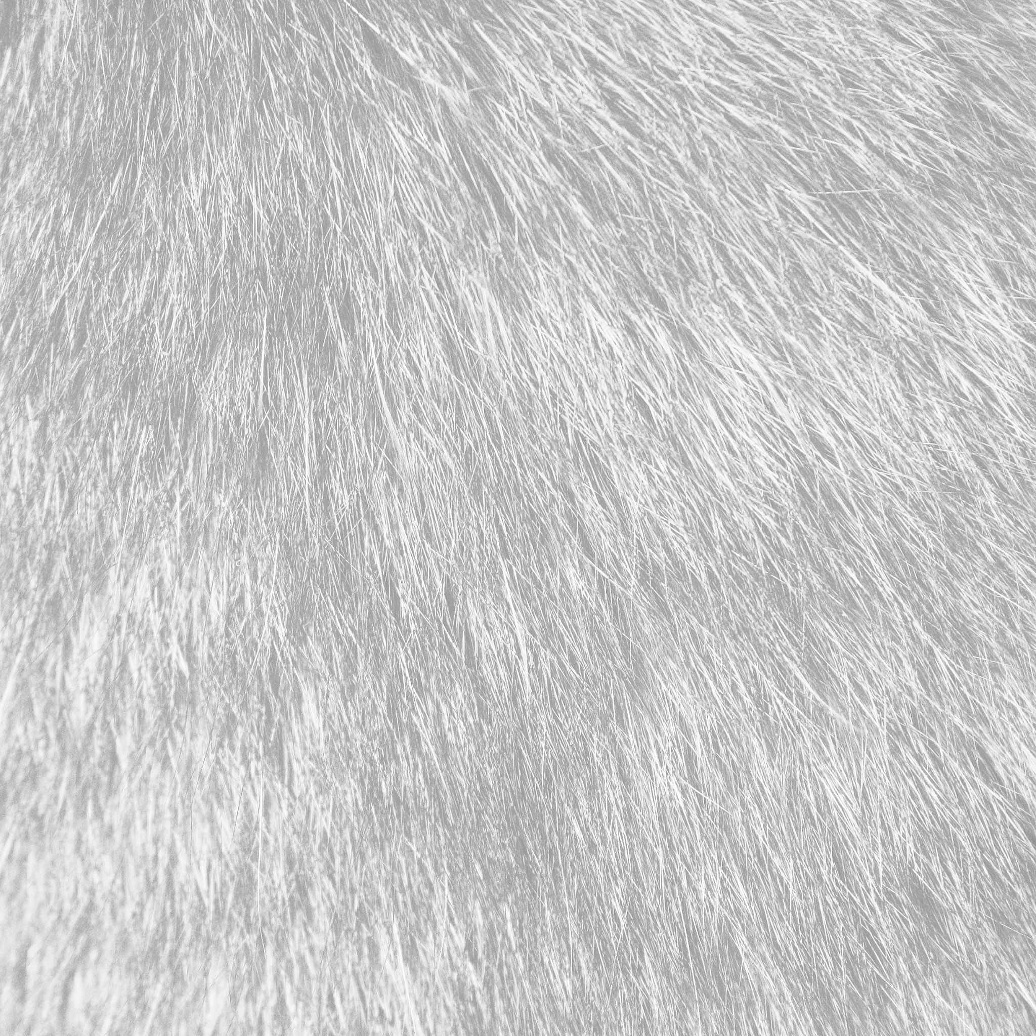 Tabby Cat Fur White Parallax Hd Iphone Ipad Wallpaper