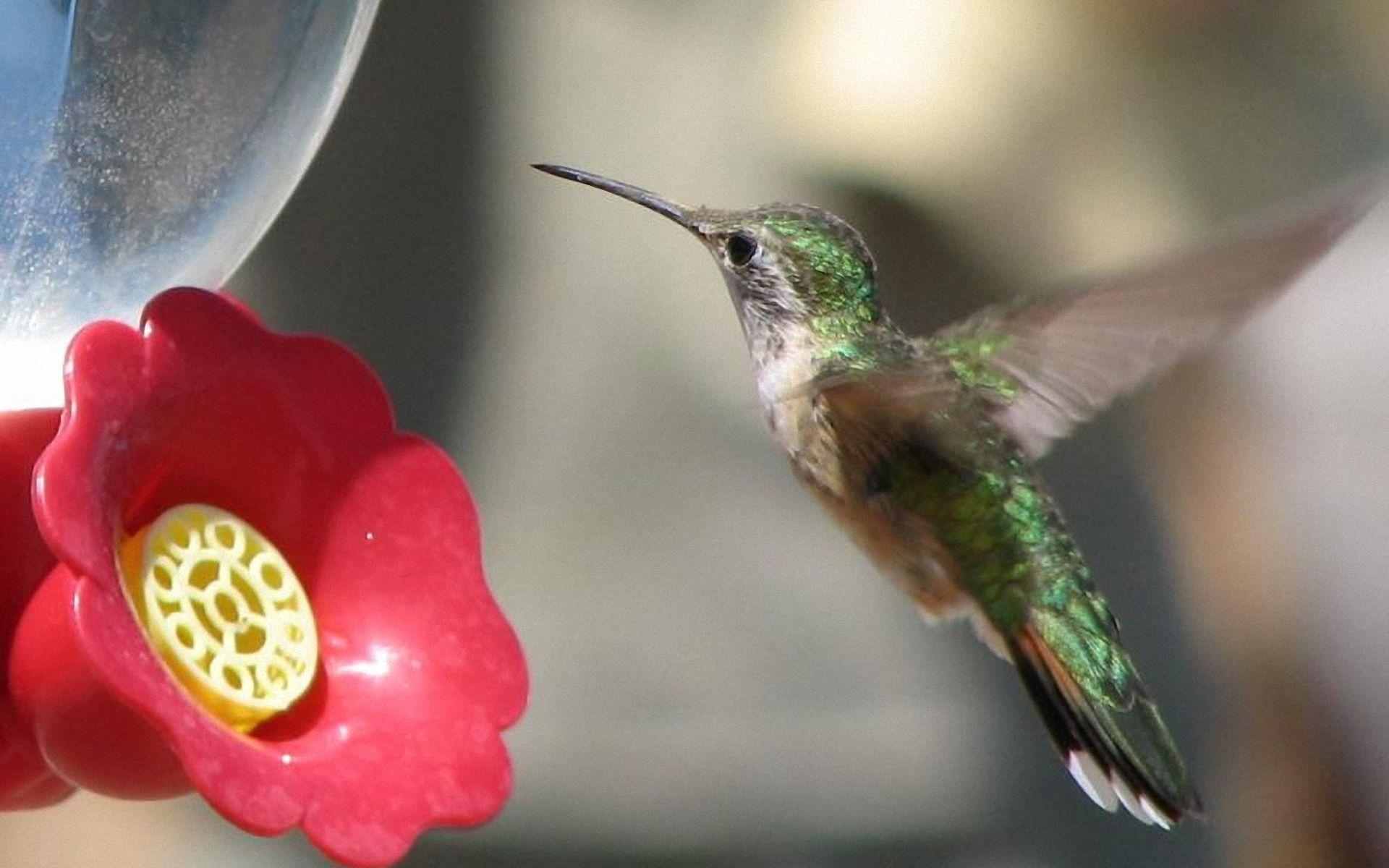 moving hummingbird wallpaper olivero