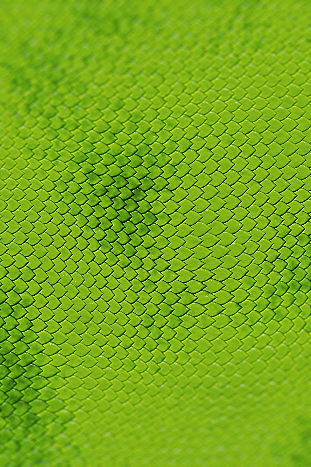 Reptile Skin iPhone wallpaper Textures Pinterest 640x960