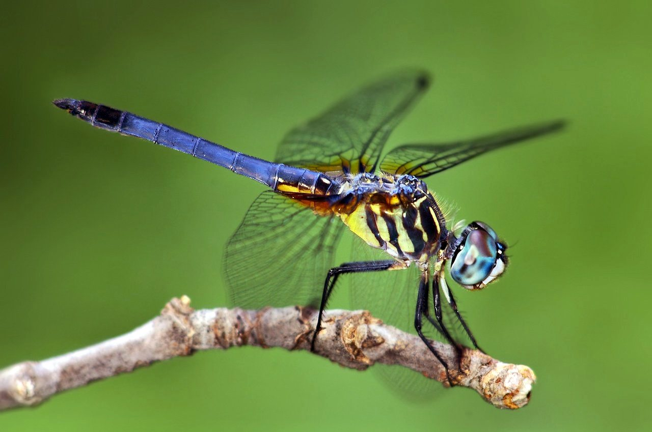 Beautiful Wallpapers For Desktop Dragon fly wallpapers 1280x849