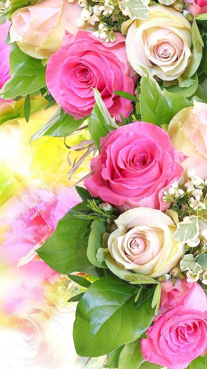 Beautiful Colourful Rose 123mobileWallpaperscom 720x1280