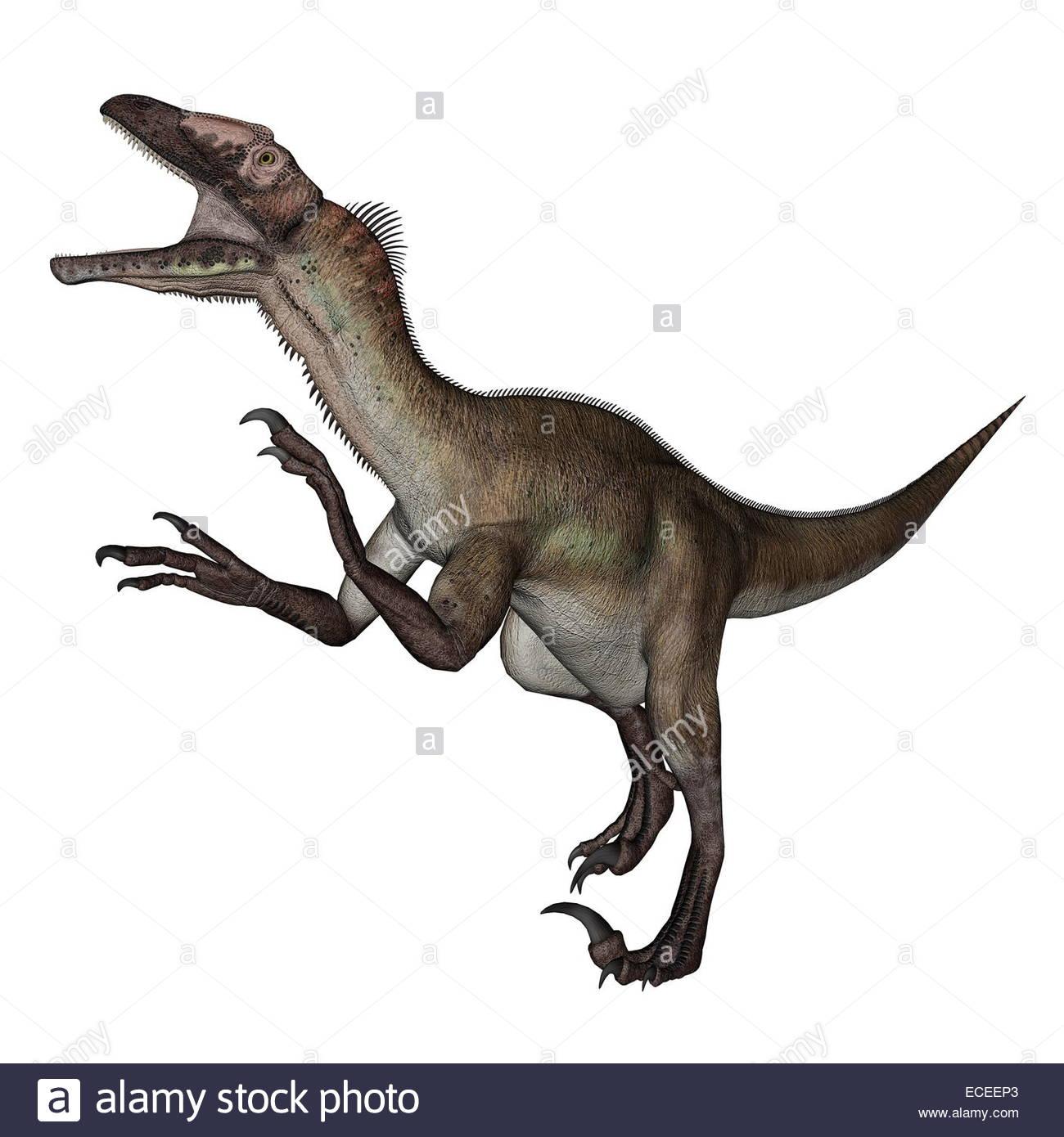 Utahraptor dinosaur roaring in white background  3D render Stock 1300x1390