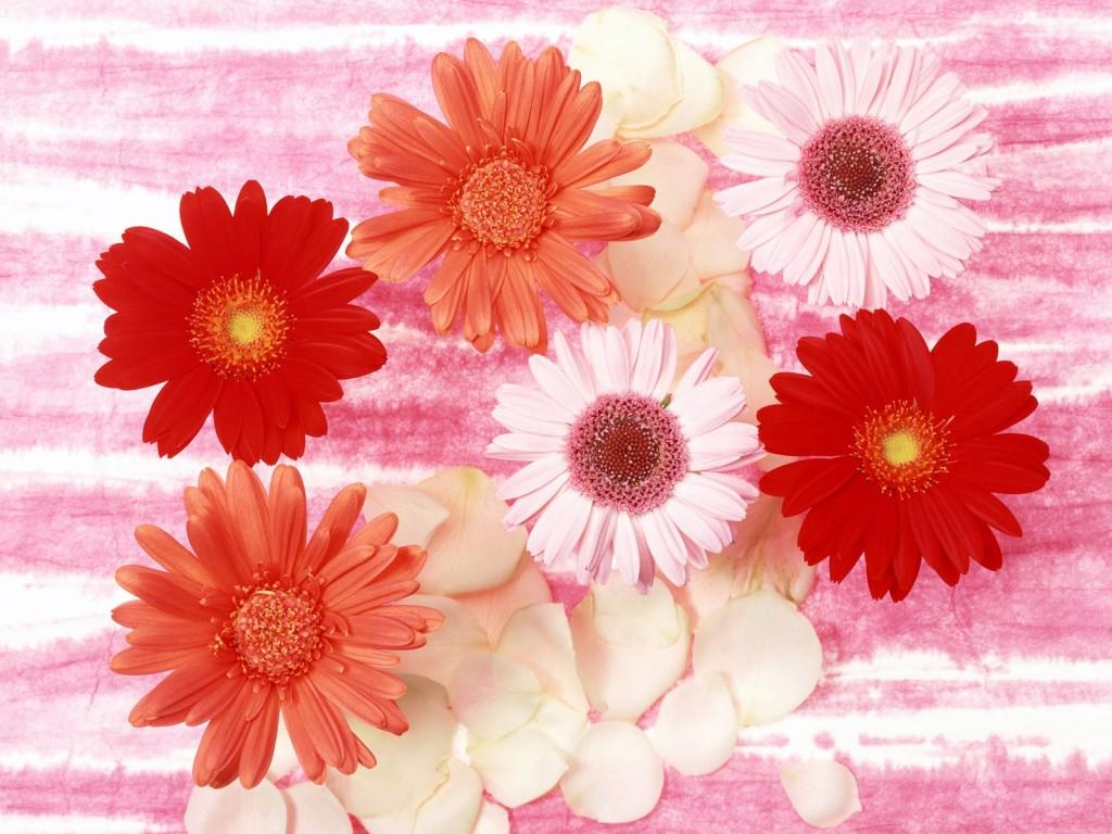beautiful flowers 1024x768