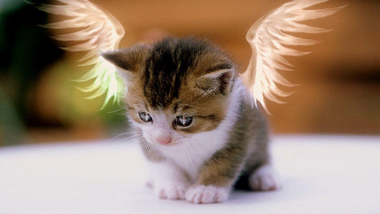 1222 jpg cat valentine mobile wallpaper jpg cat valentine victorious 1280x720