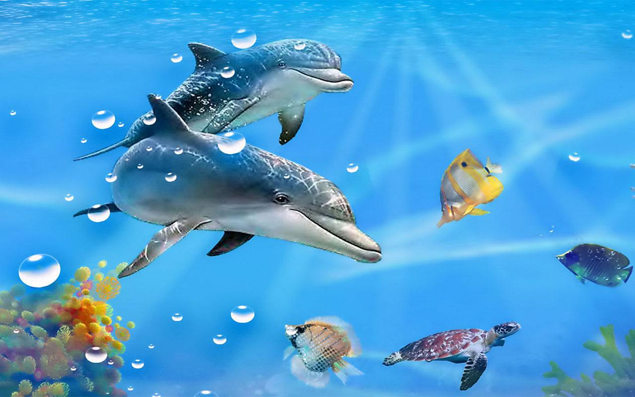 Download Dolphin Live Wallpaper for android Dolphin Live 1280x800