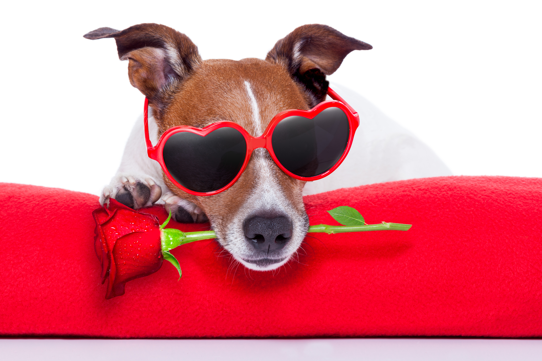 30 Happy Kiss Day Pictures Wallpapers For Lover Special: Valentine's Day Dog Wallpaper