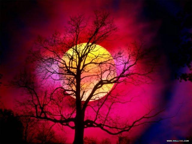 Beautiful Sunsets And Sunrises Wallpaper 640x480