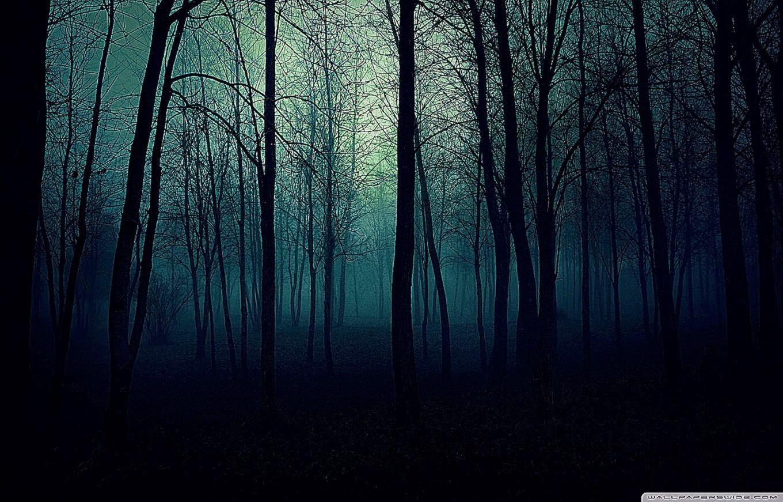 Dark Forest HD Wallpaper - WallpaperSafari Dark Forest Wallpapers Widescreen