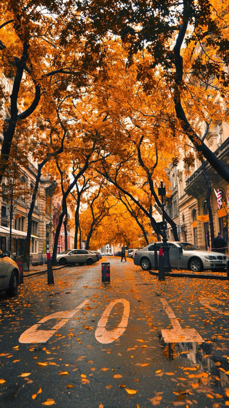 Fall iPhone wallpaper Wallpaper Fall wallpaper Autumn 750x1334