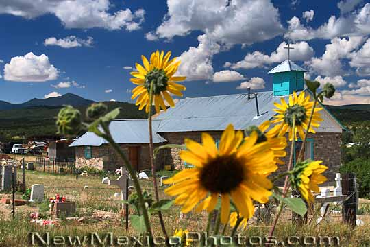 Although partially obscured by blooming sunflowers the simple beauty 540x360
