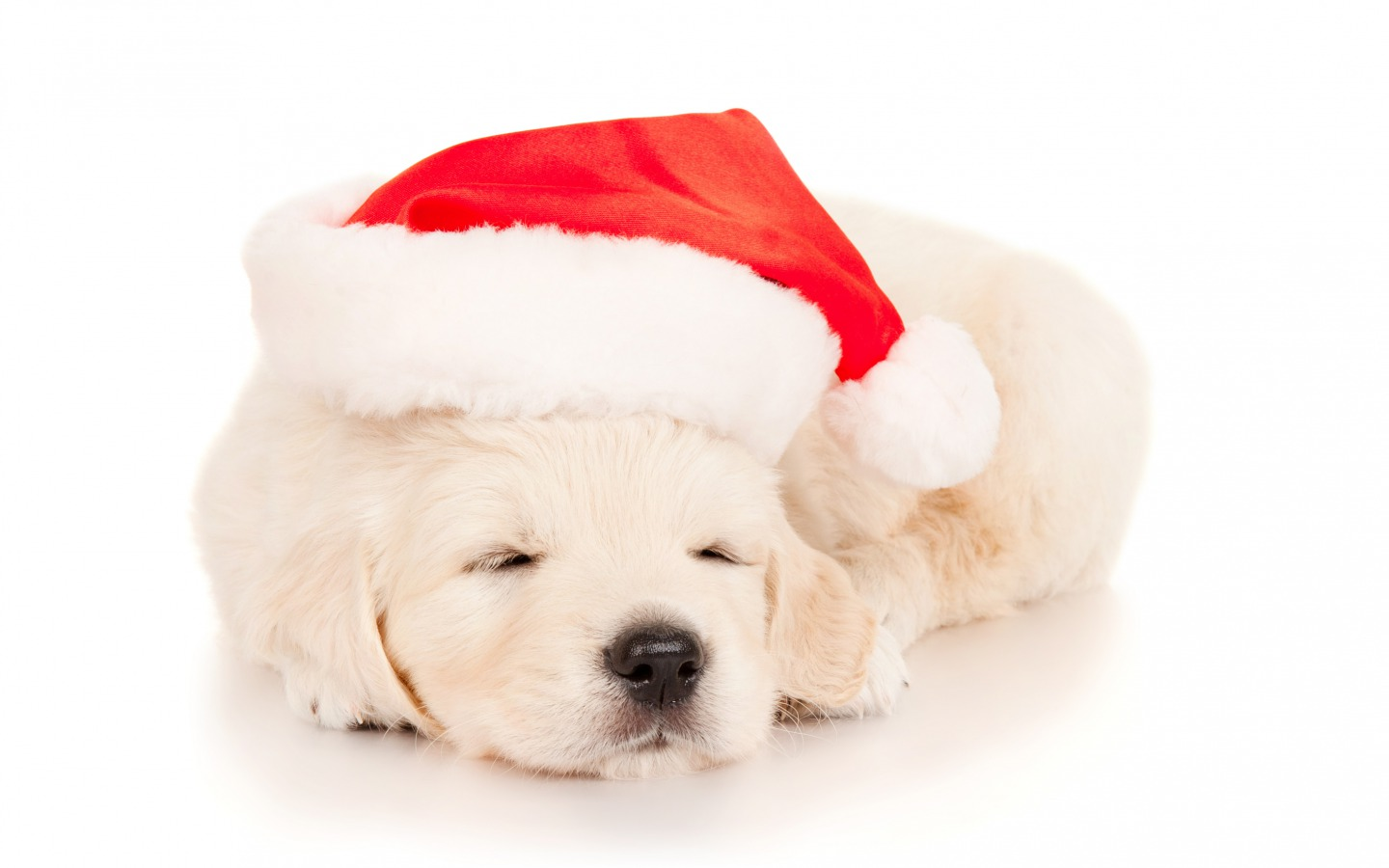 wishes gif wallpapers cute christmas puppy sleeping with christmas hat 1440x900
