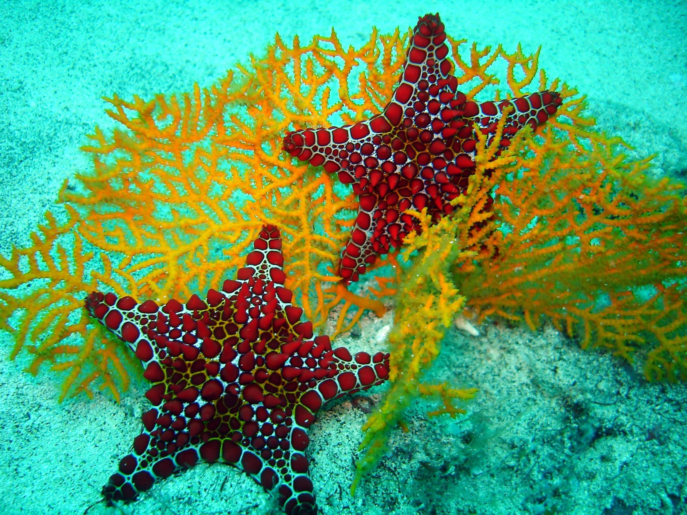 Star and Yellow Coral   Tropical FishUnderwater Sea Life Wallpaper 2293x1720