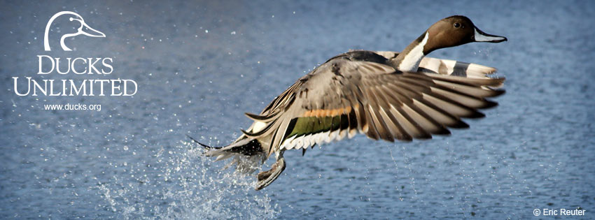 Check out Ducks Unlimiteds other social media networks 850x315