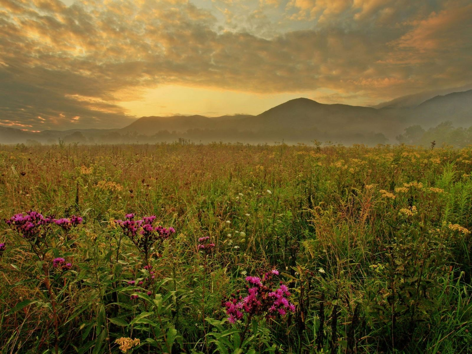 Morning Cades Cove Great Smoky Mountains   HD Wallpaper 1600x1200 1600x1200
