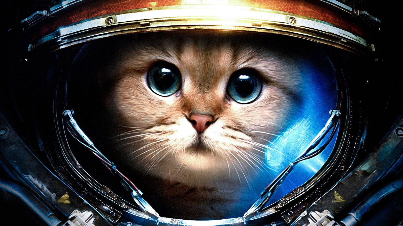 Cat AstronautHD WallpapersImagesPictures 1600x900